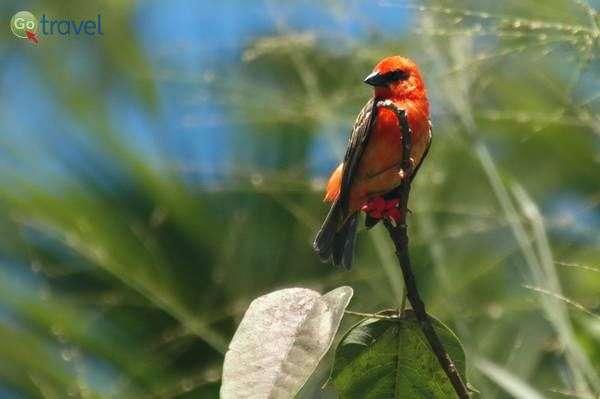 עבור חובבי הציפורים - סיישל היא גן עדן של ממש (צילום: רמי דברת)