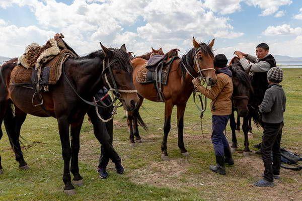 ועוד קצת סוסות באגם סונג-קול  (צילום: Ninara)