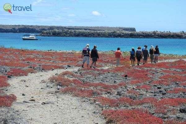 בעונה, חלק מהאיים מתמלאים בפריחה אדומה מרהיבה  (צילום: אמיר גור)