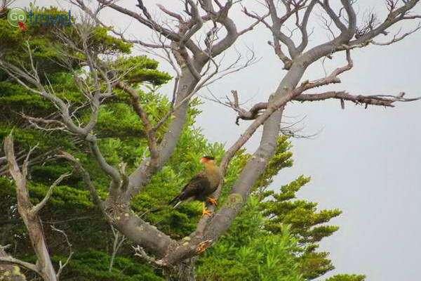 ציפור יפה אחת מיני רבות   (צילום: עופרי וייס)
