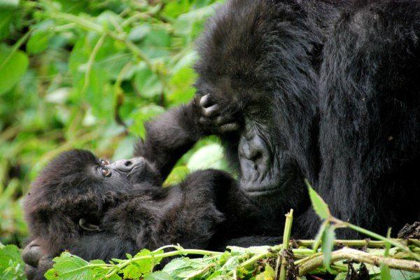 אין בעולם אהבה כמו אהבה של אימא (צילום: Carine06)