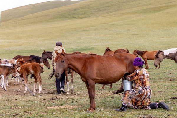 חולבת סוסים באגם סונג-קול, קירגיזסטן  (צילום: Ninara)