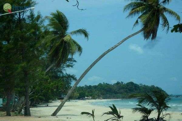 העץ השכיב את עצמו במיוחד בשביל התמונה... (צילום: ליאת עמיחי שם טוב)