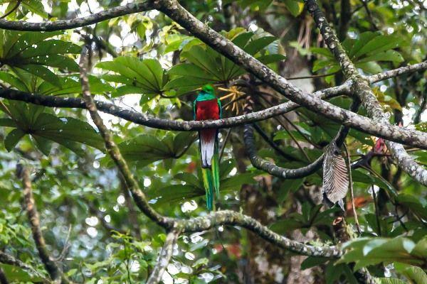 בשמורת הטבע המרהיבה ביוטופ דל קצאל תוכלו לחפש את הציפור הלאומית (צילום: Murray Foubister)