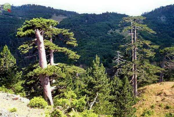 יערות מרשימים בהרי פינדוס    (צילום: כרמית וייס)