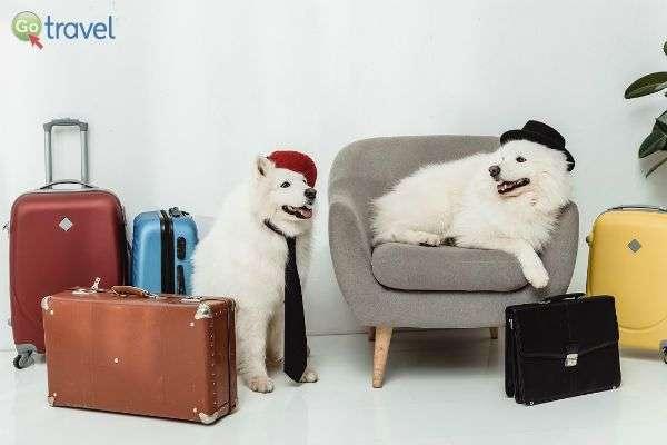 מוכנים ליציאה! (צילום באדיבות Pets2fly)