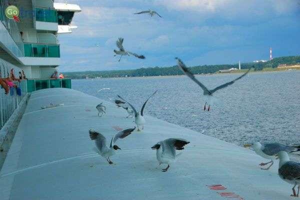 עופות נחים על דופן האנייה  (צילום: רמי דברת)