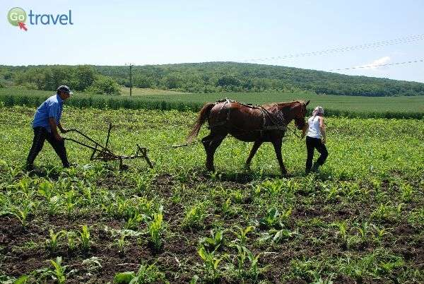 עבודת אדמה בכפר (צילום: גולן לובנוב)