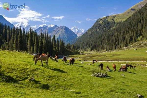 סוסים באחו לרגלי ההרים  (צילום: צביקה ברקובר)