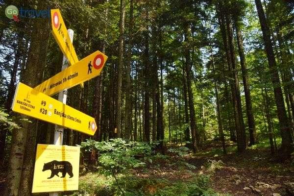 זהירות דובים בהרי טארה  (צילום: כרמית וייס)