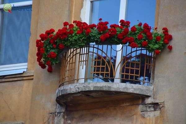 מרפסת פורחת בעיר העתיקה של קובנה   (צילום: כרמית וייס)
