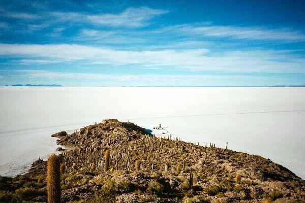 קקטוסי ענק על אי הדגים במדבר הסלאר (צילום: Jared Yeh)