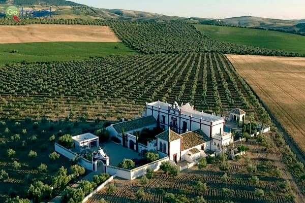 קשה לדבר על דרום ספרד מבלי להזכיר את תרבות היין (צילום: Archivo)