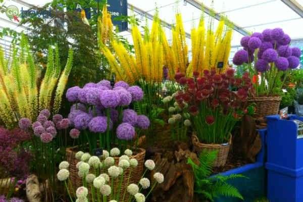 כל הפרחים שבעולם - תערוכת הפרחים בהמפטון קורט (צילום: טל אופיר)