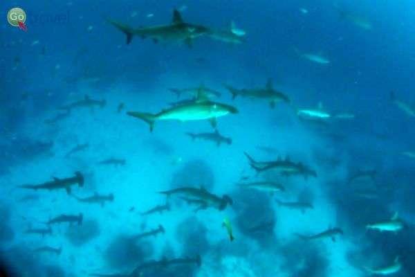 ימין ושמאל רק כרישים וכחול!  (צילום: אמיר גור)