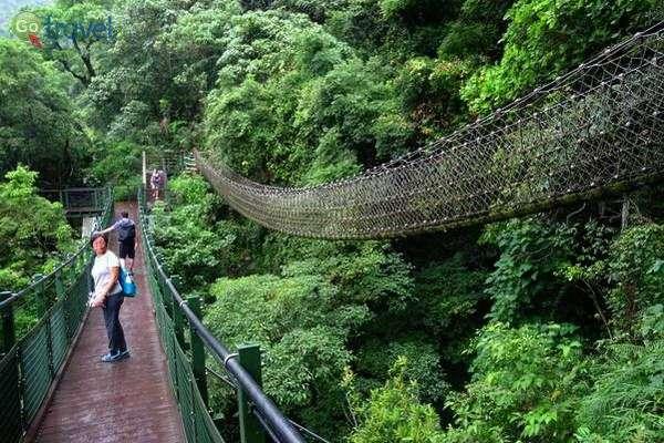 גשרים תלויים בשמורת קנטינג  (צילום: פרץ גלעדי)