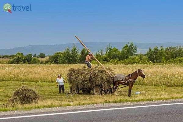 חקלאים מעבדים את השדה (צילום: נורית פרח)
