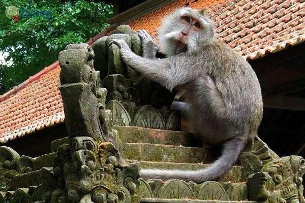 באינדונזיה מקדשים עתיקים ותרבות מרתקת (צילום: אמיר גור)