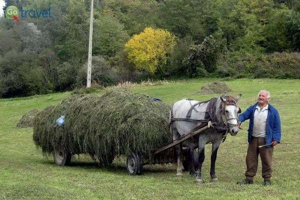 סוס ועגלה הם מחזה שכיח בבולגריה (צילום: כרמית וייס)