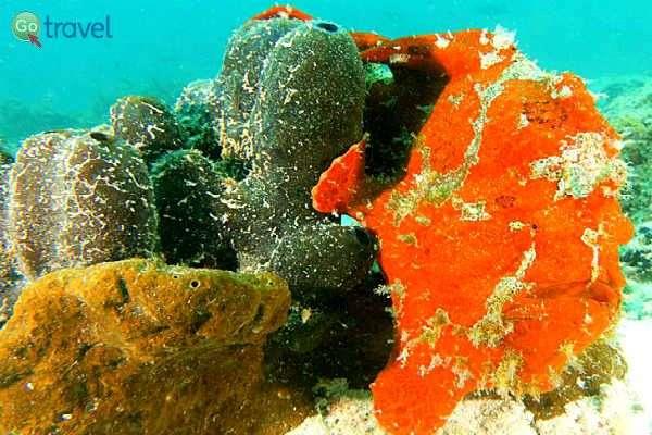 """מתחת למים באי מאפיה - בע""""ח ונופים מרהיבים (צילום: אמיר גור)"""
