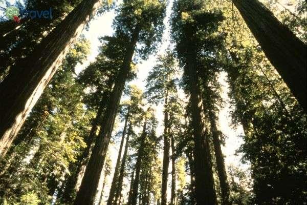 תחרות העצים - מי יגיע ראשון אל השמש? (צילום: נטע קלימי)
