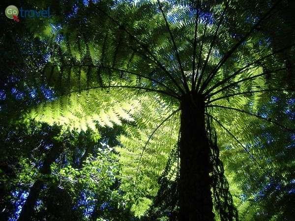 שרכים בגודל של עצים  (Photo: PRONadia308)