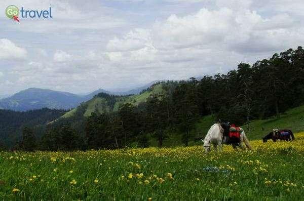 הפארק הלאומי בורג'ומי-חאראגולי   (צילום: Giorgimailo)
