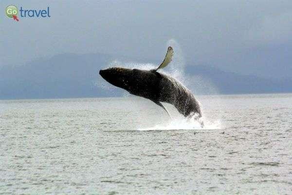 דרישת שלום מהלווייתנים (צילום: עופר גלמונד)