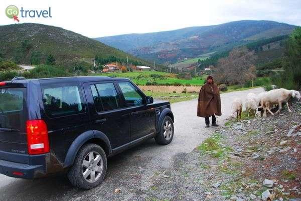 מפגש עם רועה צאן במעיל צמר אופייני  (צילום: כרמית וייס)