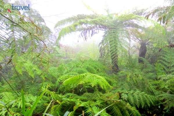 הפארק הוא יער גשם ירוק-עד ורענן  (צילום: פרץ גלעדי)