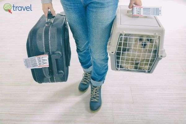 בעל החיים זוכה ליחס מיוחד בטיסה (צילום באדיבות Pets2fly)