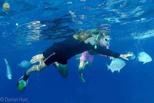 צלילה ושנירקול באי קוזומל (צילום: Dan Hurt)