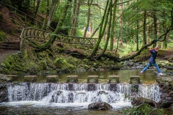 יער טולימור - כאן נמצאו זאבי הבלהות של ילדי בית סטארק (צילום: Phil Rogers)