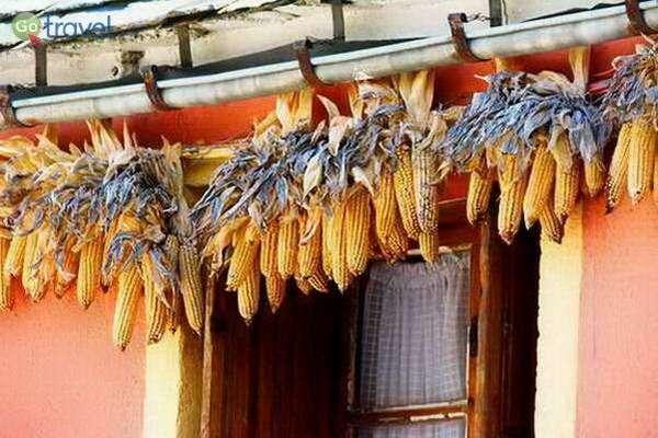 קלחי תירס תלויים לייבוש עבור החזירים, העיירה איינסה  (צילום: צחי גלובין)