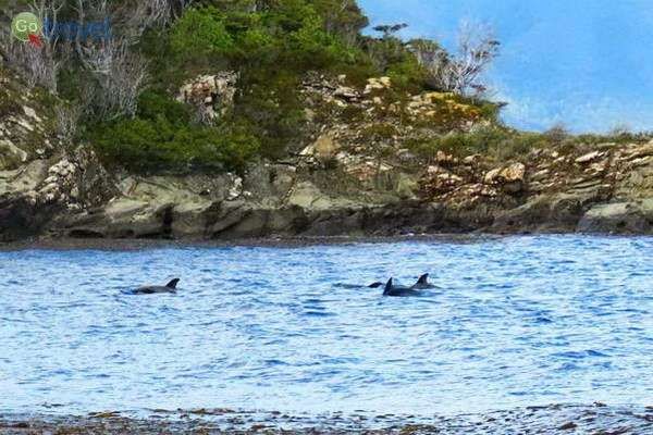 כמה דולפינים שהצלחתי לצלם   (צילום: עופרי וייס)