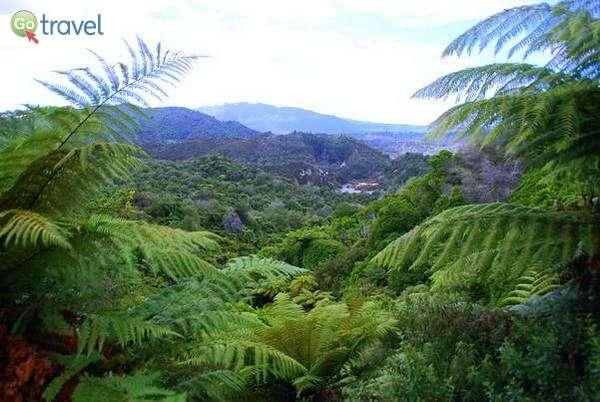 ירוק משגע באזור רוטורואה  (צילום: הילה וייס)