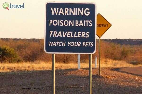 """""""...מטיילים - שמרו על חיות המחמד שלכם!"""" (צילום: פרץ גלעדי)"""