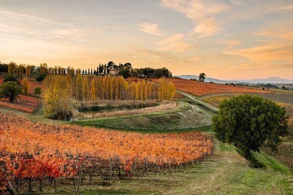 כרמים בצבעי הסתיו בעיירה מונטפלקו (צילום: Arnaldo Caprai Winery)