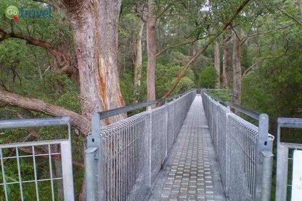 גשרים בין עצי עמק הענקים  (צילום: יפעת סלע)