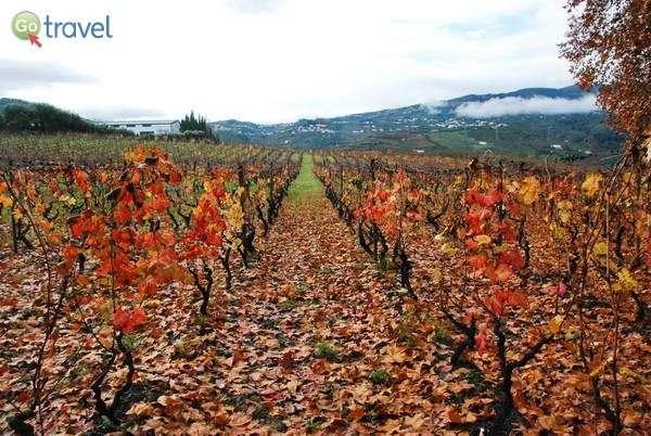 צבעי הסתיו בעמק דורו (צילום: כרמית וייס)
