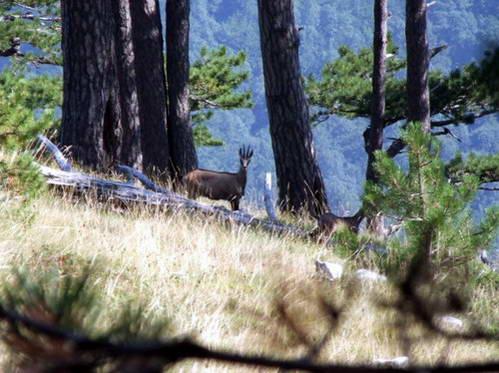 הפארק הלאומי סוטייסקה, בוסניה והרצגובינה