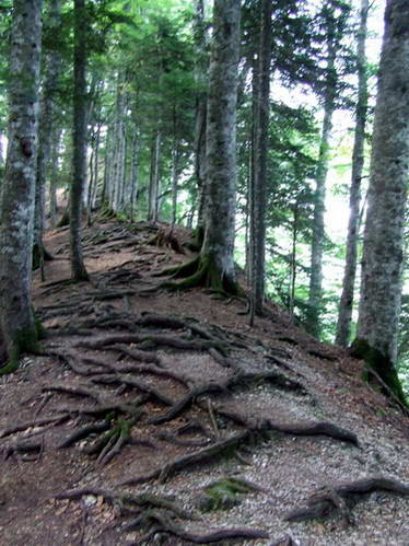 יער פרוצ'יצה, הפארק הלאומי סוטייסקה, בוסניה והרצגובינה