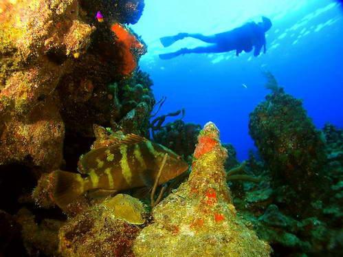 צלילה בקריבים - האי אוטילה