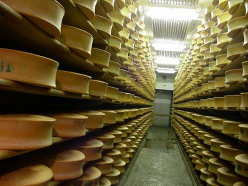 מרתפי ההבשלה של גבינת בופור