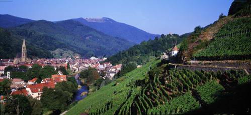 דרך היין באלזאס