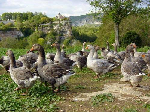 חוות אווזים, אפשר לראות ולבקר בכל רחבי הדורדון