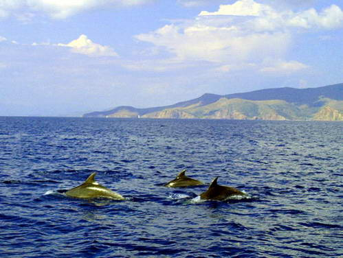 דולפינים, שייט באיי יוון