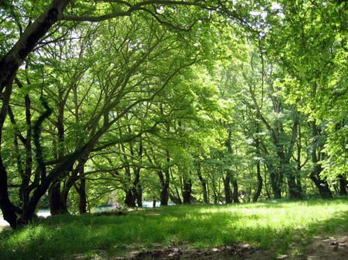 יערות צפון יוון