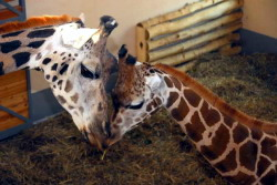 גן החיות של בודפשט, לטייל עם ילדים בהונגריה