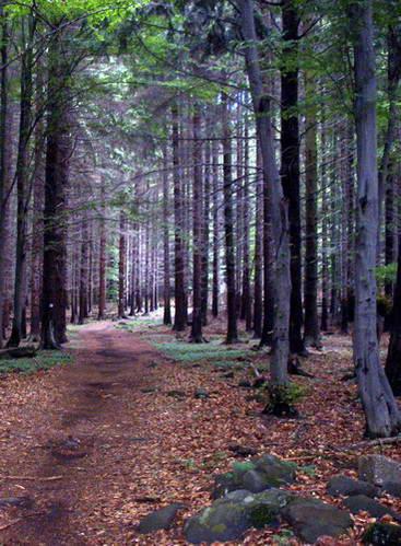 יערות הרי הטטרה, הונגריה